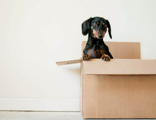 Tips for moving home with dog